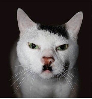Cats-that-look-like-Hitler-2.jpg